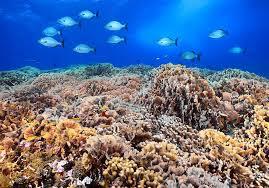 Barriera Corallina Pacifico