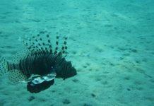 oceano-pesci