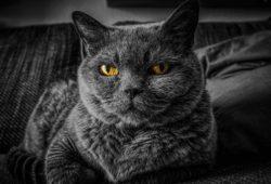 gatto tentato omicidio anziana