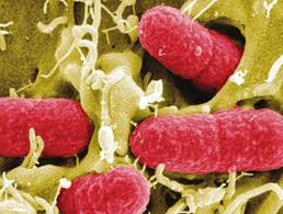 Batteri tumori
