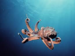 Polpo tentacoli