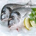 pesce probiotico