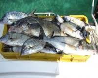 Sequestro Pesce Avariato