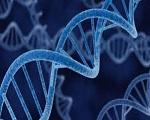 DNA genoma sintetico