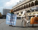Orso Polare Roma Greenpeace