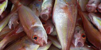 dieta-pesce