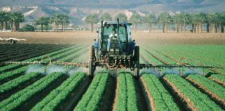 Pesticid dieta bio