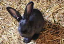 Agrituirismo animali salvi