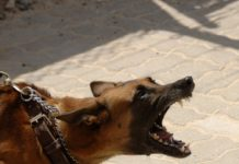 Cane fattorino aggredito e ucciso