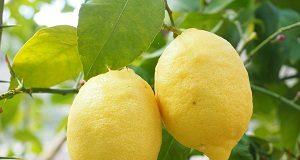 Limone agrume detox