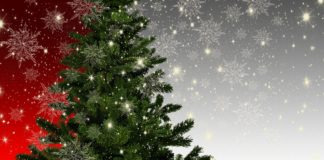 Albero di Natale ecologia inquinamento