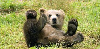 Bambino nel bosco salvato da un orso