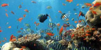 Puglia barriera corallina