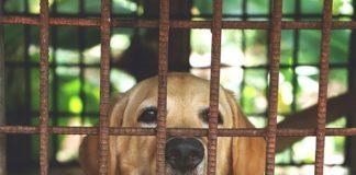 Cani rapiti per essere cucinati ristoranti coreani