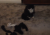 gatto ruba collant vicini