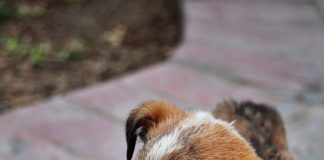 Ragazza muore per la rabbia canina trasmessale da un cucciolo che aveva salvato