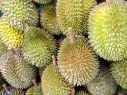 Durian frutto esotico