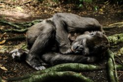 Specie rischio estininzione mammiferi