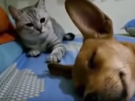 Cane e gatto video you tube