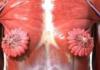 Anatomia seno femminile